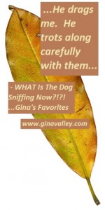 Humor Funny Humorous Family Life Love Laugh Laughter Parenting Mom Moms Dad Dads Parenting Child Kid Kids Children Son Sons Daughter Daughters Brother Brothers Sister Sisters Grandparent Grandma Grandpa Grandparents Grandfather Grandmother Parenting Gina Valley WHAT Is The Dog Sniffing Now?!?! ...Gina's Favorites Focus