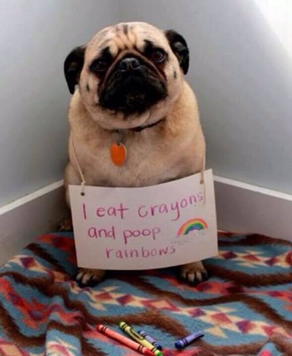 Humor Funny Humorous Family Life Love Laugh Laughter Parenting Mom Moms Dad Dads Parenting Child Kid Kids Children Son Sons Daughter Daughters Brother Brothers Sister Sisters Grandparent Grandma Grandpa Grandparents Grandfather Grandmother Parenting Gina Valley Facebook Pinterest Friday Funnies - sdovc